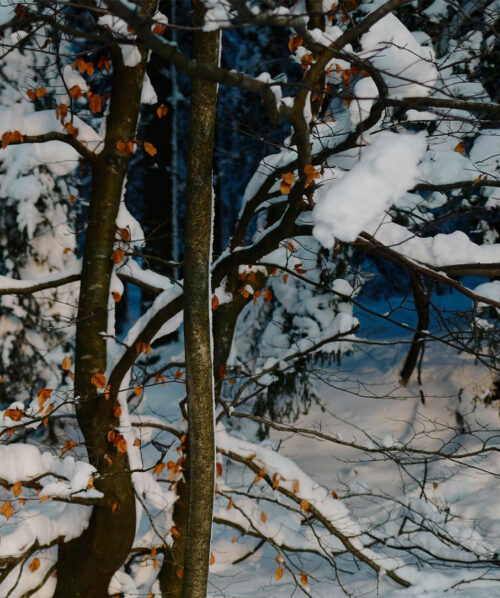winter forest and branches covered in snow oslo norway