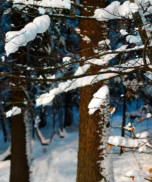 winter forest norway oslo